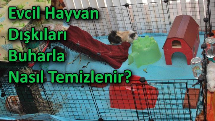 Evcil Hayvan Dışkıları Buharla Nasıl TemizlenirEvcil Hayvan Dışkıları Buharla Nasıl Temizlenir